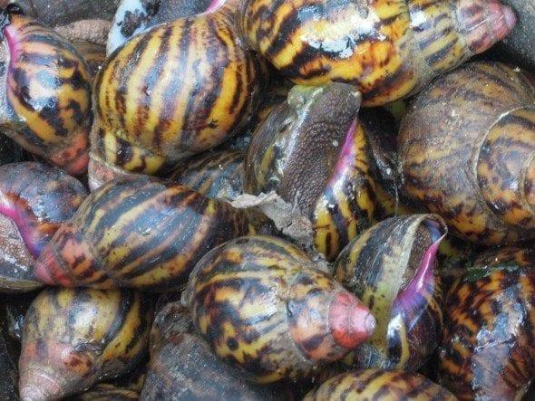 DSCN1356 roça bombaim em são tomé Até à Roça Bombaim em São Tomé DSCN1356 590x443