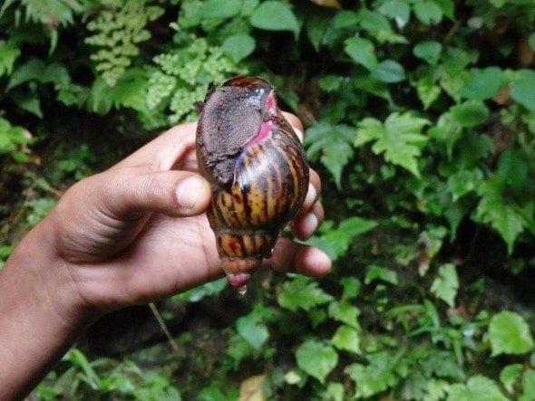 P9180019 roça bombaim em são tomé Até à Roça Bombaim em São Tomé P9180019 590x443
