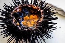 Sopa de Ouriços-do-mar